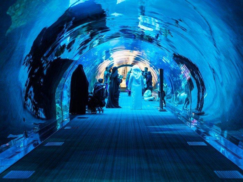 Купить билет в аквариум дубай лунгерн швейцария недвижимость